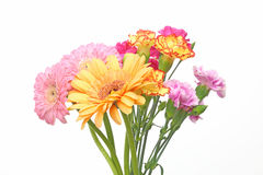 Bouquet of carnation and transvaal daisy Royalty Free Stock Photos
