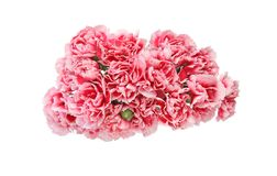 Bouquet of carnation in a white background Stock Photography