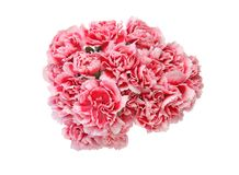 Bouquet of carnation in a white background Stock Photos