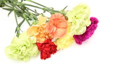 Bouquet of carnation in a white background Royalty Free Stock Photos
