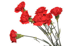 Bouquet of carnations. Flowers of a carnation are collected in a bouquet Royalty Free Stock Photos