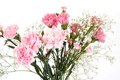 Bouquet of carnations Royalty Free Stock Images