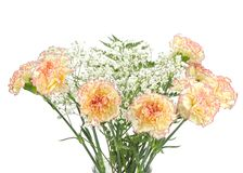 Bouquet of carnations Stock Image