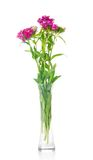 Bouquet of carnations in the glass transparent Stock Photo