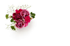 Bouquet of carnations Stock Photos