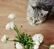 Bouquet with a cat Royalty Free Stock Image
