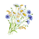 Bouquet  chamomile blue wildflower  watercolor. Bouquet  chamomile wildflower  flower watercolor pattern handmade white background Royalty Free Stock Photos