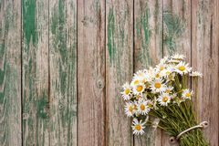 Bouquet chamomile daisies in door handle fence old wooden boards. With peeling paint Rustic vintage background Copy space stock photos