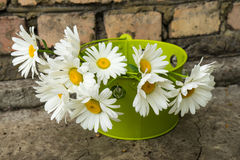 Bouquet of chamomile flowers. Against a brick wall Royalty Free Stock Photos