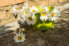 Bouquet of chamomile flowers. Against a brick wall Stock Image
