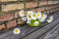 Bouquet of chamomile flowers against a brick wall. Bouquet of chamomile flowers on a wooden surface against a brick wall Stock Image