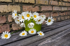 Bouquet of chamomile flowers against a brick wall. Bouquet of chamomile flowers on a wooden surface against a brick wall Royalty Free Stock Image
