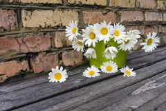 Bouquet of chamomile flowers against a brick wall. Bouquet of chamomile flowers on a wooden surface against a brick wall Royalty Free Stock Images