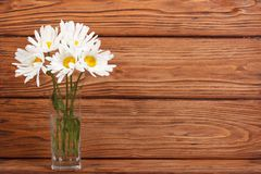 Bouquet of chamomile flowers in a glass vase Royalty Free Stock Image