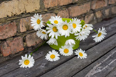 Bouquet of chamomile flowers against a brick wall. Bouquet of chamomile flowers on a wooden surface against a brick wall Stock Images