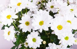 Bouquet of chamomile Royalty Free Stock Photography
