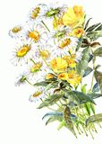 Bouquet  chamomile  wildflower  watercolor Royalty Free Stock Photos