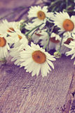 Bouquet of chamomile Stock Photography