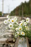 Bouquet of chamomiles. The bouquet of white chamomiles lies on railway rails Stock Photos