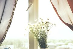 Chamomiles on window. Bouquet of chamomiles on a background of window Royalty Free Stock Photos