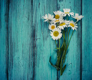 Bouquet of chamomiles on blue vintage wooden background. Royalty Free Stock Image