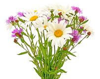 Bouquet chamomiles and cornflowers Royalty Free Stock Photo