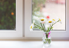 Bouquet of chamomiles flowers on the window sill Stock Images