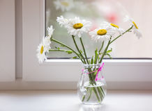 Bouquet of chamomiles flowers on the window sill Stock Image