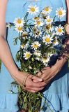 A bouquet of chamomiles in the hands of a girl. A bouquet of chamomiles in the hands of a pregnant girl Stock Photos