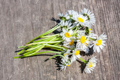 Bouquet of chamomiles. One of the symbols of spring and summer. They are well-known and beloved Royalty Free Stock Image