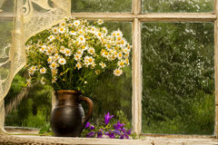 Bouquet. Chamomiles on the window sill in a sunny rainy day Stock Photography