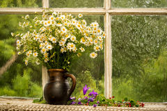 Bouquet. Chamomiles on the window sill in a sunny rainy day Royalty Free Stock Photos