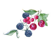Bouquet of cherries, blackberries and red currants. Isolated on white background. Watercolor illustration Royalty Free Stock Photos