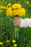 Bouquet in a child's hand Royalty Free Stock Image