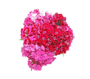 Bouquet of china pink Royalty Free Stock Photo