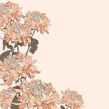 Bouquet of chrysanthemum on beige background. Stock Photography