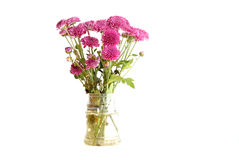 Bouquet of chrysanthemum flowers Royalty Free Stock Image
