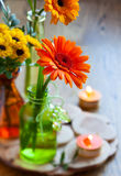Bouquet of chrysanthemum and gerbera Royalty Free Stock Photo