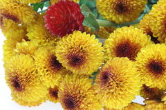 Bouquet of chrysanthemum and globe amaranth Stock Images