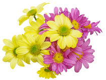 Bouquet of chrysanthemum Royalty Free Stock Photography