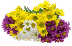 Bouquet of chrysanthemum Royalty Free Stock Image