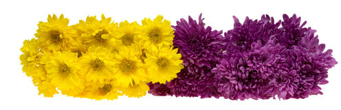 Bouquet of chrysanthemum Royalty Free Stock Images