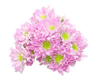 Bouquet of chrysanthemum Stock Image