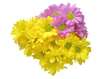 Bouquet of chrysanthemum Royalty Free Stock Photo