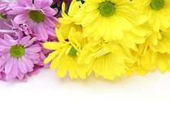 Bouquet of chrysanthemum Stock Photo