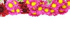 Bouquet of chrysanthemum Royalty Free Stock Image