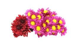 Bouquet of chrysanthemum Stock Image
