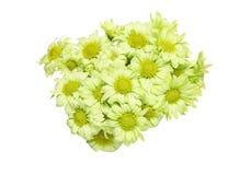 Bouquet of chrysanthemum Royalty Free Stock Photos
