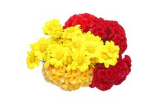 Bouquet of chrysanthemum and plumed cockscomb Royalty Free Stock Image