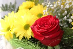 Bouquet. Of chrysanthemum and red roses Stock Image